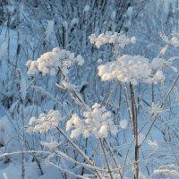 Зимние цветы :: Людмила