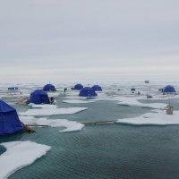 Путешествие по Арктике. :: игорь кио