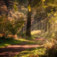 Sunlight... :: Александр