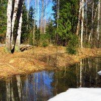 Свеж и прозрачен весенний лес в это поэтическое время :: Григорий охотник