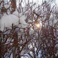 Мороз и солнце.... :: Валентин Семчишин