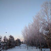 Холодным февральским утром :: Марина Птичка