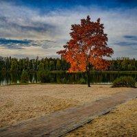Осенний пляж :: Николай
