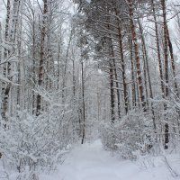 Зачарованный лес дремлет в безмятежной тишине зимы :: Григорий охотник