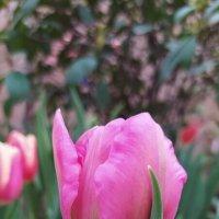 Скоро весна :: Татьяна Тюменка