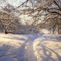 Зимний сад :: Наталья Лакомова