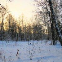 Холодное зимнее утро в пустынном лесу :: Григорий охотник