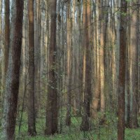 Зелёный шум :: Александр Юдин