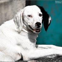 бездомный пес живущий в Абхазии :: Валерий Викторович РОГАНОВ-АРЫССКИЙ