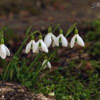 Вестники Весны :: Валерий Басыров