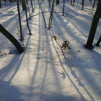 Солнце пока нелегко поймать :: Андрей Лукьянов