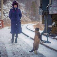 Котик встречает и ждёт рождественских подарков с туристического поезда по КБЖД :: Алексей Белик