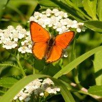 cкоро лето, бабочки...28 :: Александр Прокудин