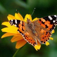 cкоро лето, бабочки...30 :: Александр Прокудин