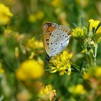 cкоро лето, бабочки...33 :: Александр Прокудин