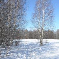 Зимне-весенняя прогулка :: Андрей Зайцев