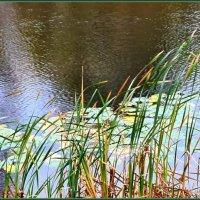 Осень на пруду. :: Лариса Масалкова