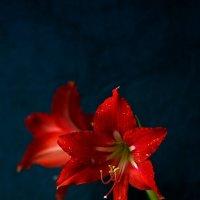 Цветок любви... :: Владимир Деньгуб