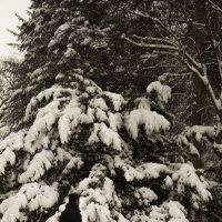 Снег в марте :: Aнна Зарубина
