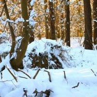 Загадки зимнего леса! :: Mila .