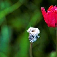 неизбежность... :: Осень