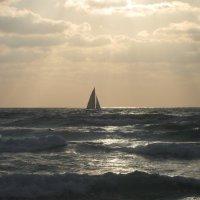Море и парус. :: Светлана Хращевская