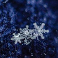 последние снежинки :: Александр Леонов