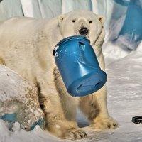 Полярный медведь Кай. :: аркадий