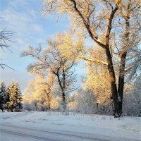 Мороз и солнце :: Василий