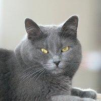 Наш котик Дымка :: Agapa ***
