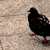 Птичье царство 18 :: Полина Куприянова