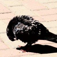 Птичье царство 19 :: Полина Куприянова