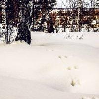 Следы на снегу :: Сергей Царёв