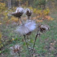 Балет в лесу...На балу у осени... :: Андрей Хлопонин