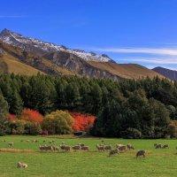Осень в Новой Зеландии :: Евгений Печенин