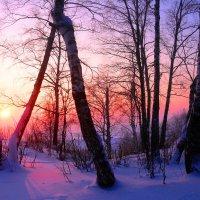 На закате :: владимир тимошенко
