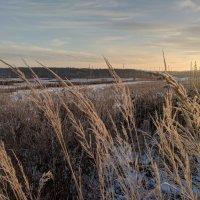 Зимние травы :: Марина Птичка