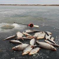 Рыбалка по последнему льду :: Юрий Пучков