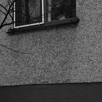 Кто-то дома, а кто-то без.. :: Сергей Крылов