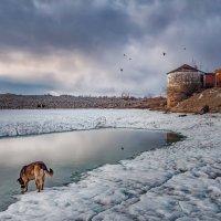 Старая башня :: Igor Volkov