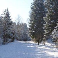 Хорошо в мартовском лесу.. :: zoja