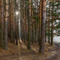 Утро в лесу :: Олег Алексеев