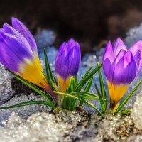 Осторожно, Весна! :: Marina Pavlova