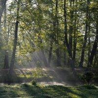 Утро у пруда...... :: Юрий Цыплятников