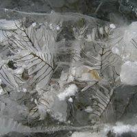Ледниковый период :: Anna Ivanova