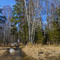 Опять весна на белом свете... :: Галина