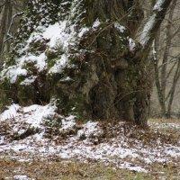 """Весна...останній подих зими."" :: Ростислав Кухарук"