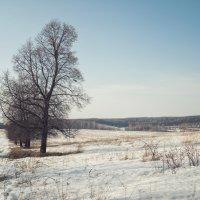 Весенний пейзаж :: Юлия Авдеева