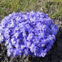 Весенний шар голубой. :: zoja
