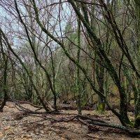 Странный лес :: Валерий Т